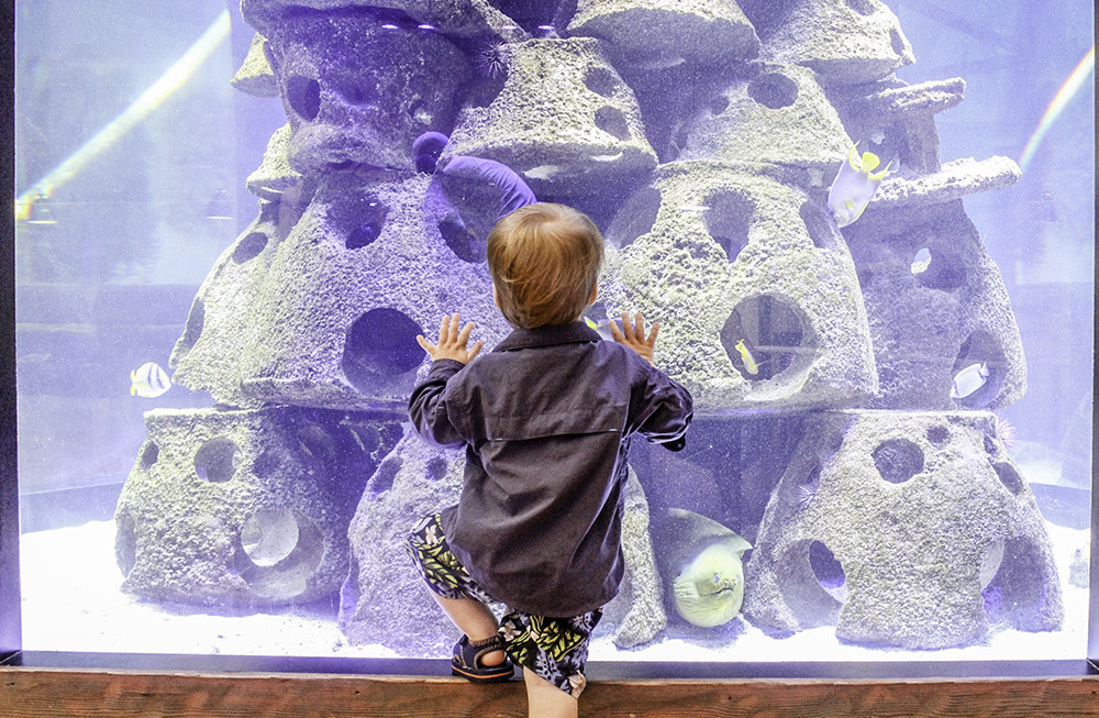 Kids love exploring aquariums while on vacation, 1 of 5 Budget and Family Friendly Things to Do in California