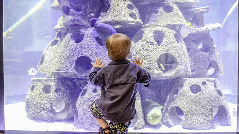 Kids love exploring aquariums while on vacation. Make sure to check to see if the one you visit offers reciprocity if you are a member of another aquarium or zoo. Photo Credit: Hannah Rinaldi | Fabulously Frugal TravelingMom