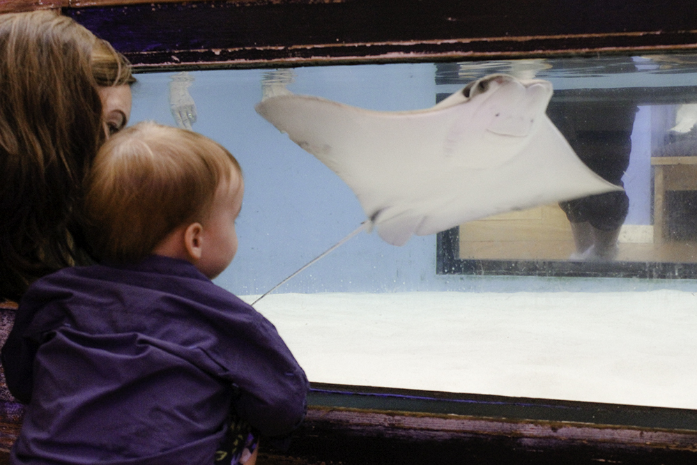 Kids can watch the stingrays at the Marine Science Center in Ponce Inlet, another 1 of 7 Best Family Friendly Things to do in Daytona Beach