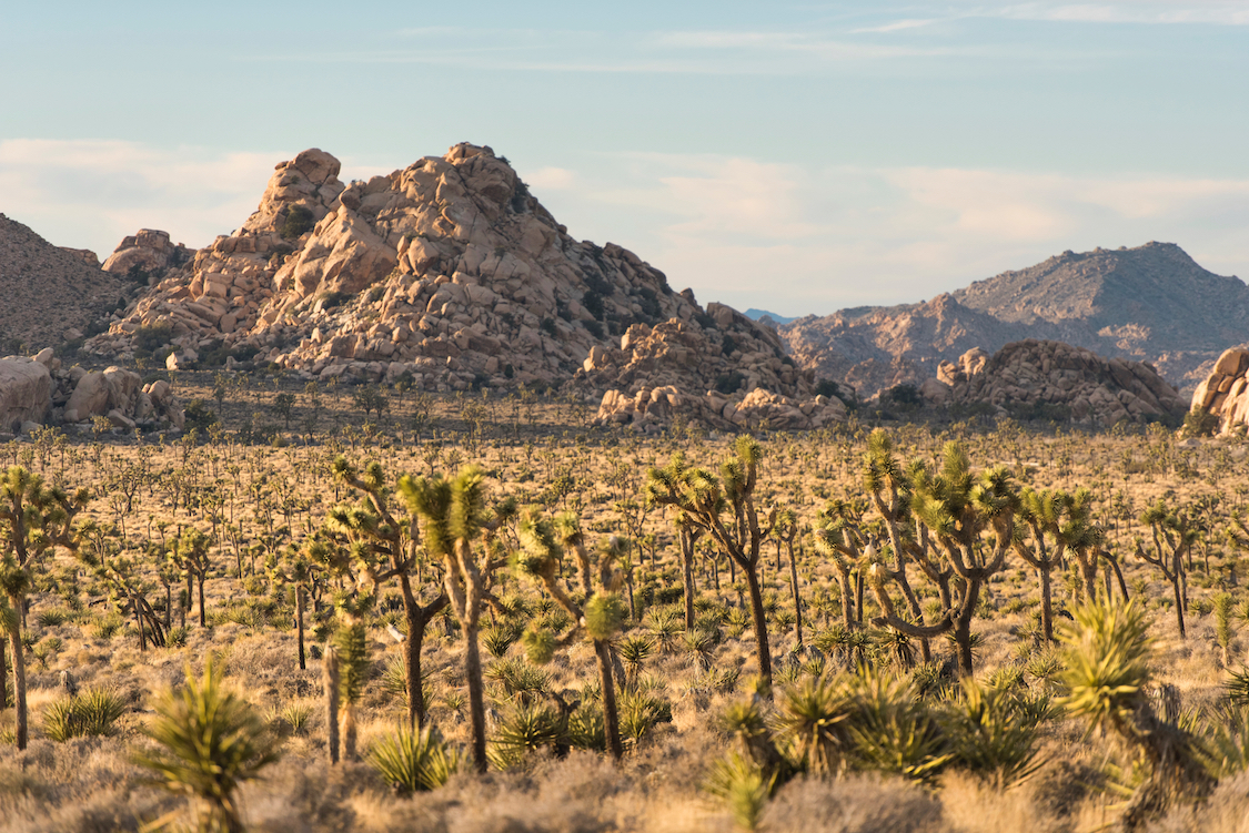 explore Joshua Tree National Park with your family in Southern California