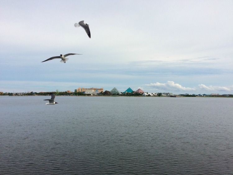 Birds fly over the lake at Moody Gardens
