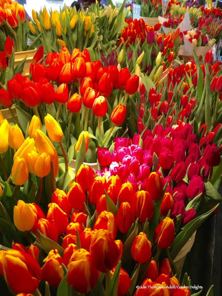 Things to Do in Seattle Pike Place Market Tulips