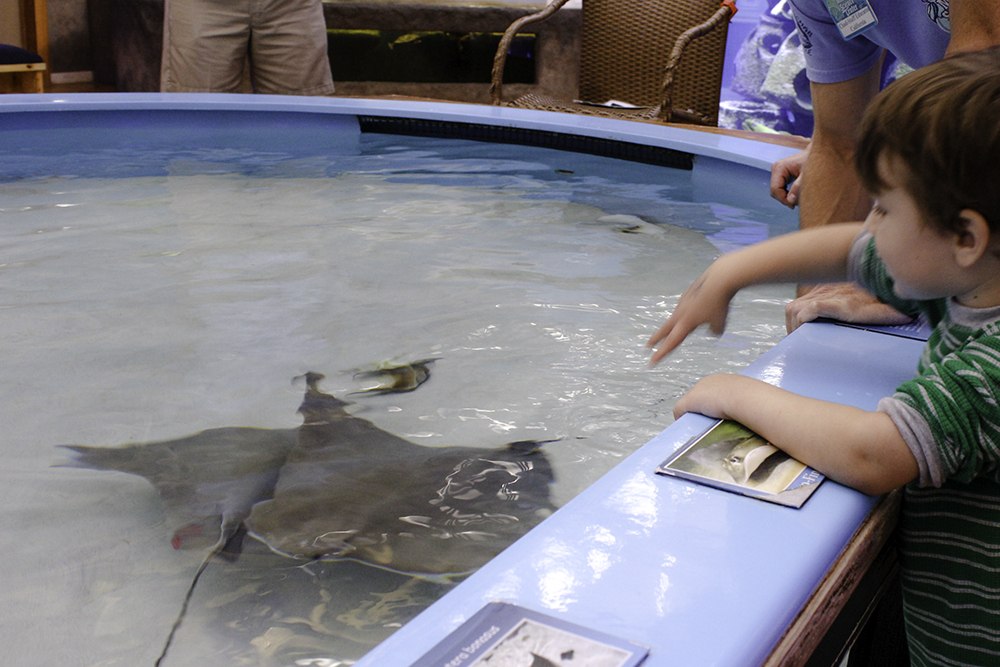 Robert petting a stingray at The Marine Science Center in Ponce Inlet