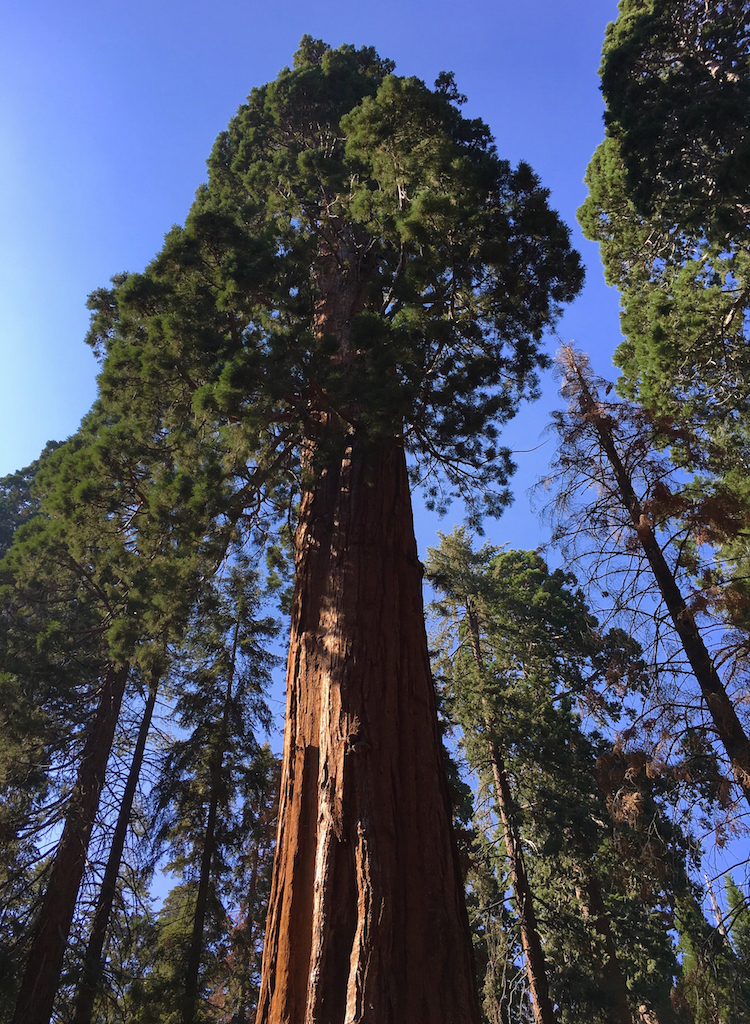 Visit Sequoia National Park, a California National Park, for giant redwoods.