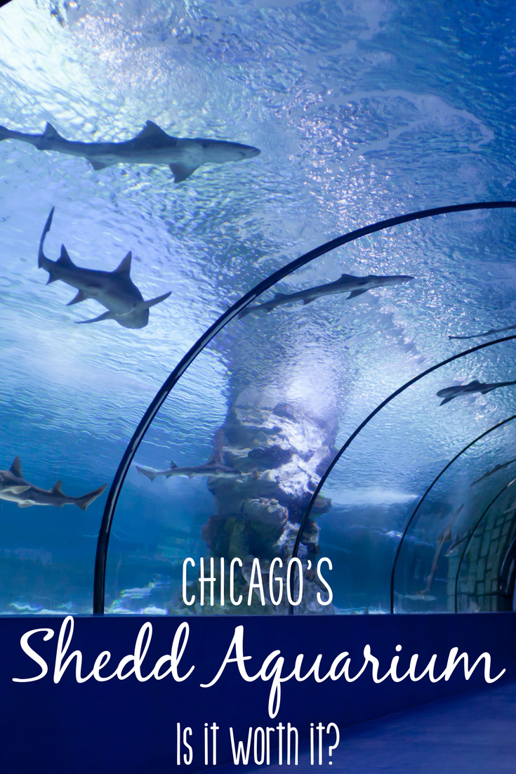 The Shedd Aquarium in Chicago is one of the oldest and most well-known aquariums in the country. With it's beluga whales, aquatic shows, traveling exhibits, and educational activities, it's definitely a neat place. But is the high price of admission at the Shedd Aquarium worth it?