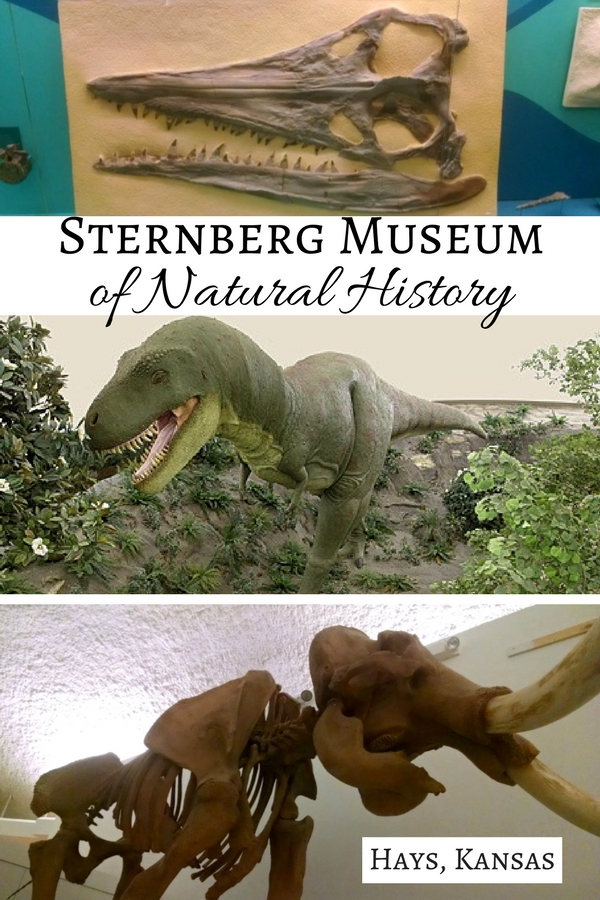 Taking a road trip through western Kansas? Make a pit stop at the Sternberg Museum of Natural History in Hays, the perfect Kansas road trip destination.