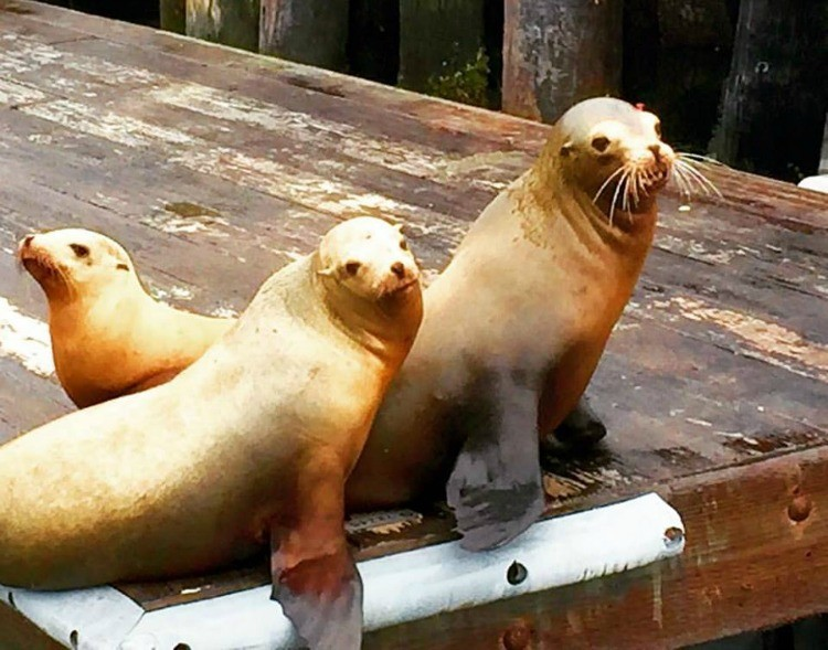 Things to do on the Central Coast of California: visit the sea lions at Morro Bay.