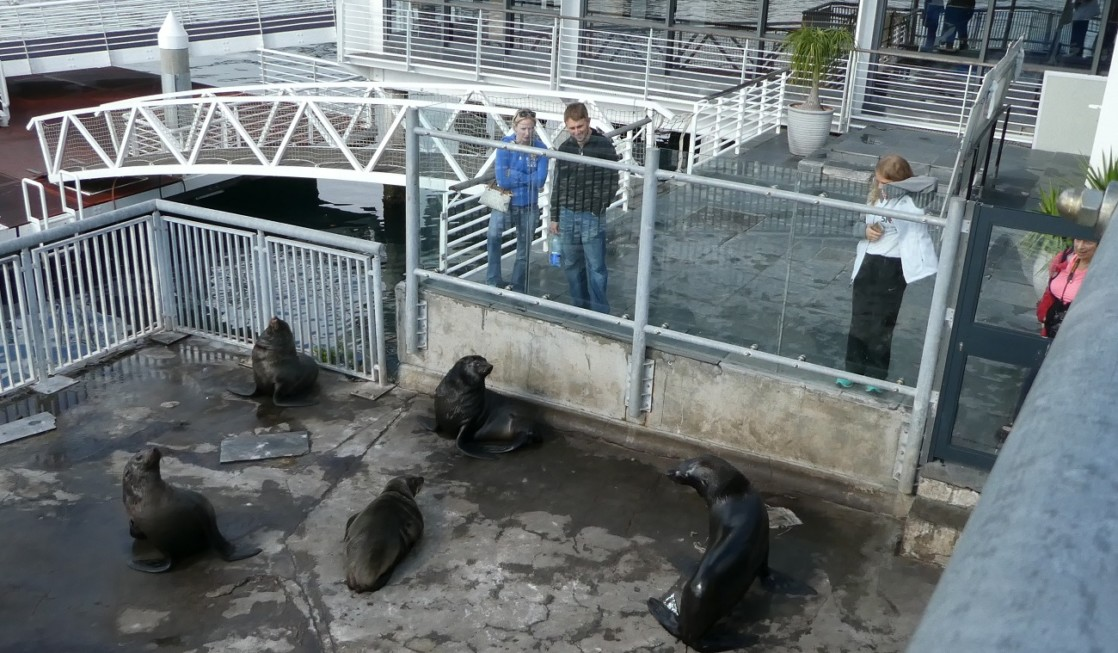 Watching seals at the V&A Waterfront in Cape Town, South Africa
