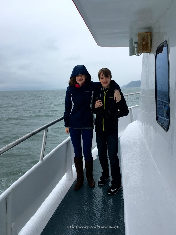 Things to Do in Seattle Washington Whale Watching