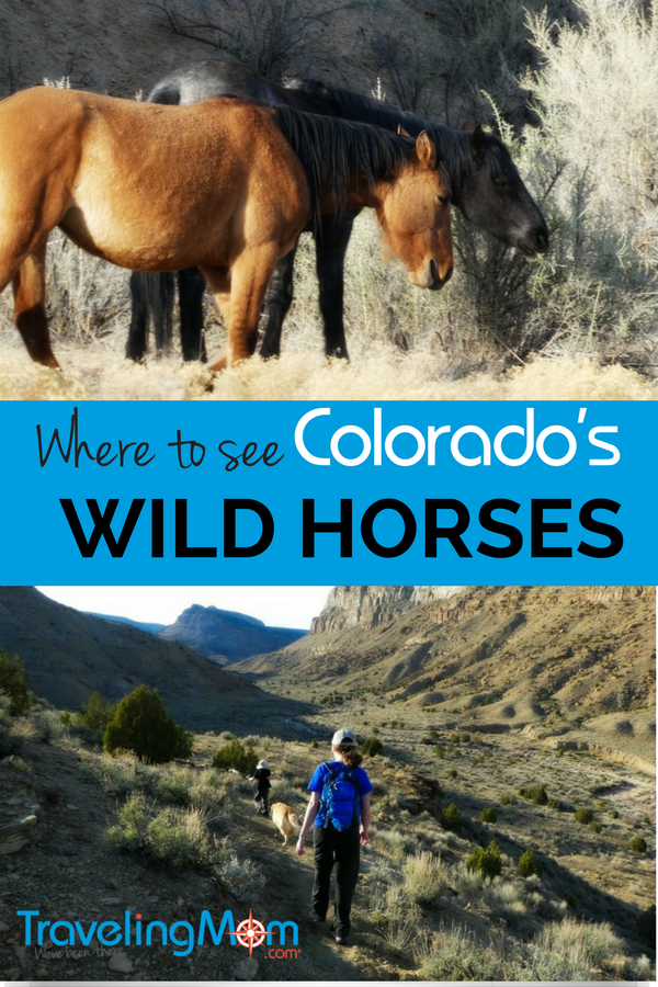 Where to See Colorado's Wild Horses! Little Bookcliffs Wild Horses area is a fun free activity for families. Hiking trails are open year round. Here's what you need to know to plan a fun day adventure there.