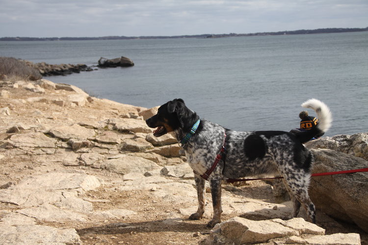 Leashed dogs can join a CT family hike to Bluff Point in Groton, CT.