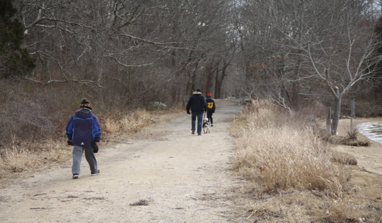 Start a CT family hike on the wooded path at Bluff Point State Park in Groton, Connecticut.