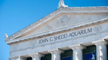 Chicago's Shedd Aquarium facade - beautiful and intriguing, but is a visit worth it?