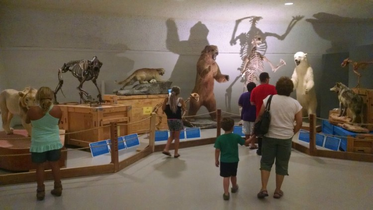 Animal statues and skeletons on display at the Sternberg Museum of Natural History in Hays, Kansas. It's the perfect Kansas road trip destination!