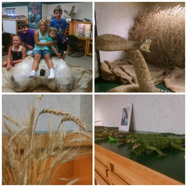 The Discovery Room at the Sternberg Museum of Natural History offers an educational, hands-on space for kids featuring a whale skull, vegetation and creatures specific to Kansas. It's the perfect Kansas road trip destination!