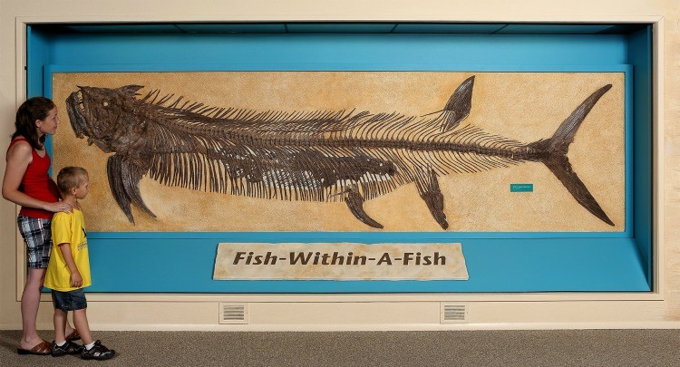 The infamous Fish-Within-A-Fish skeleton display at the Sternberg Museum of Natural History in Hays, Kansas. It's the perfect Kansas road trip destination!