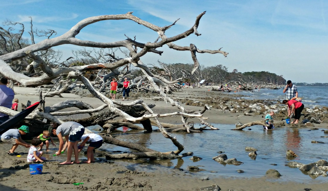 Georgia's Driftwood Beach on Jekyll Island offers a unique landscape that kids love!