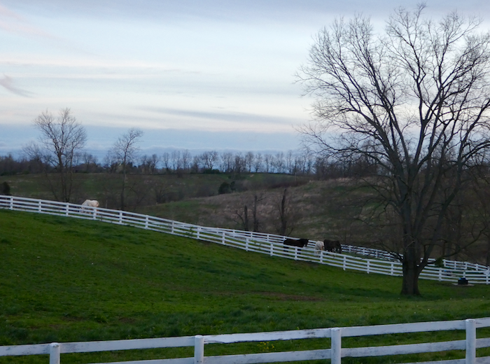 Horses in the Pasture at the Shaker Village