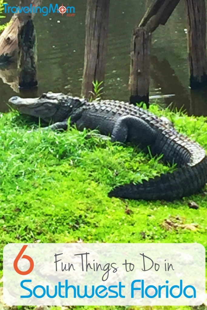 Finding Old Florida And Gators In Southwest Florida