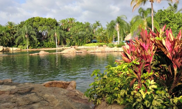Discovery Cove: Paradise To Be Explored In Orlando