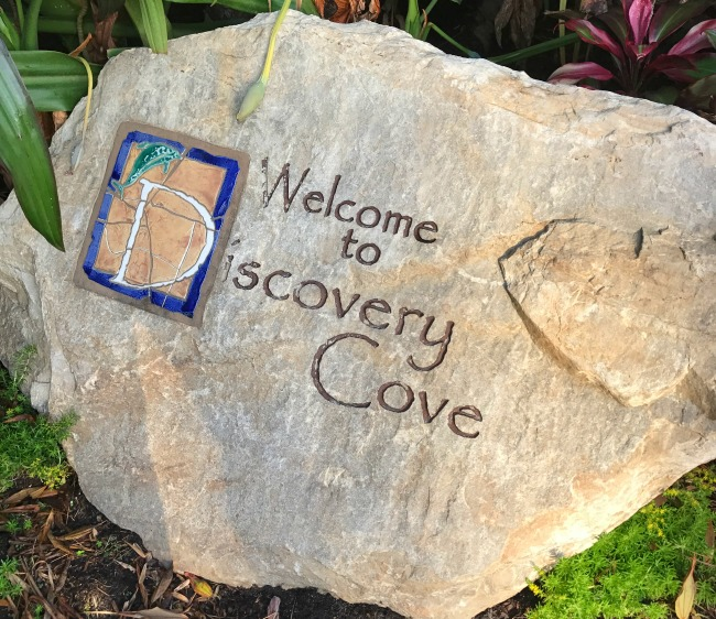 Discovery Cove Orlando is undoubtedly a piece of paradise, from lush landscapes to tropical fish and more. Swim with dolphins on your next Florida vacation!