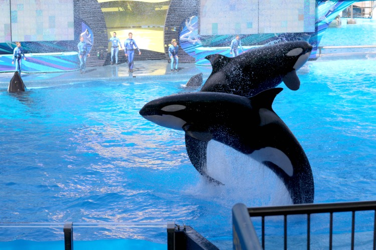 If you've never been, you're in for a few surprises when visiting Sea World Orlando. From rides to animals, you'll be amazed at how much there is to see.