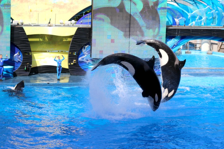 There are plenty of things to flip over when visiting Sea World Orlando
