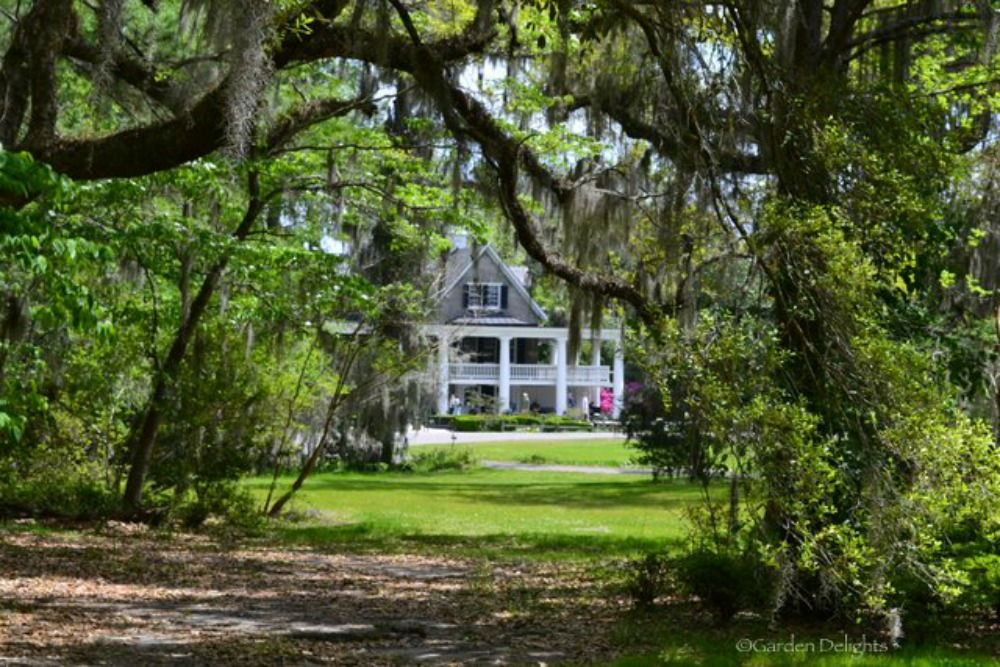 Things to Do in Charleston SC Magnolia Plantation and Gardens