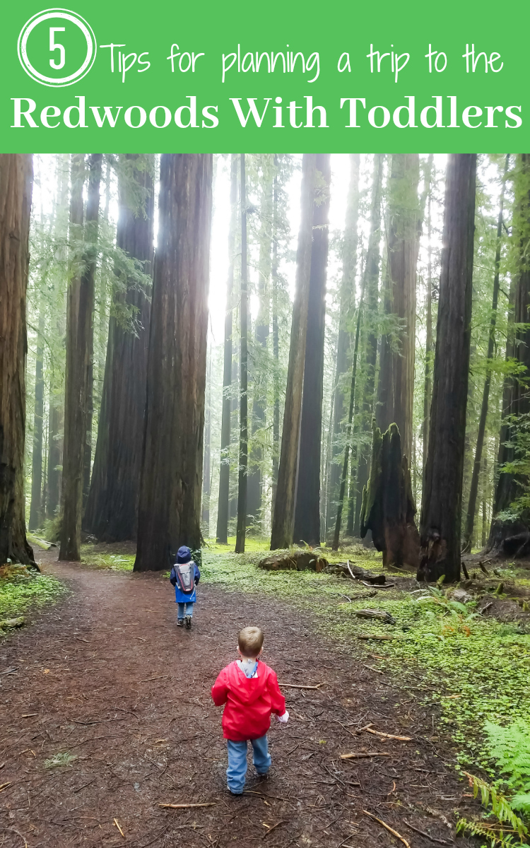 Are you ready to explore the California Redwoods with toddlers? Check out our super easy (and smart!) tips for a successful visit to see the California Redwoods!