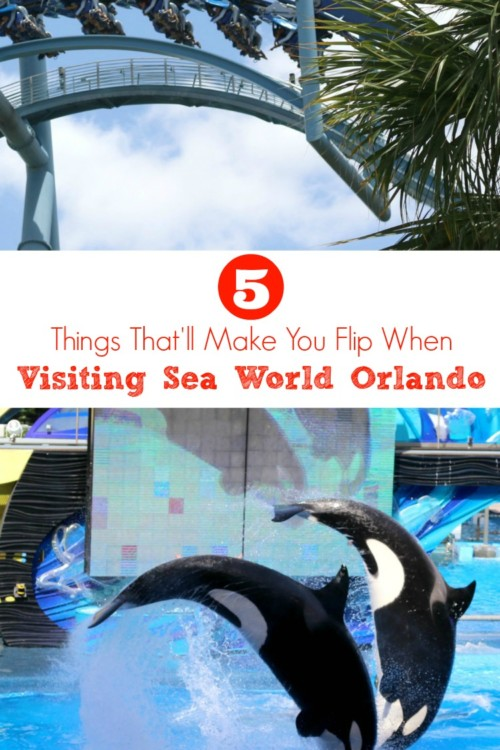 Planning on visiting Sea World Orlando? You'll flip over all the things that they have to offer!