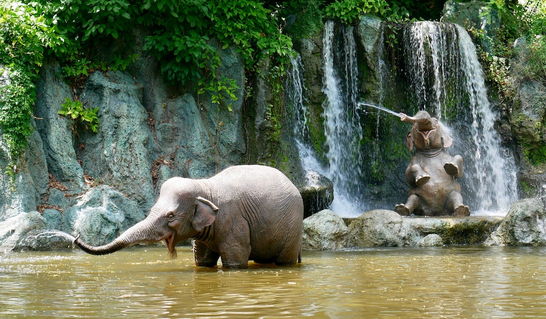 Elephants take a break in the Magic Kingdom on the Jungle Cruise ride, a favorite attraction for preschoolers.