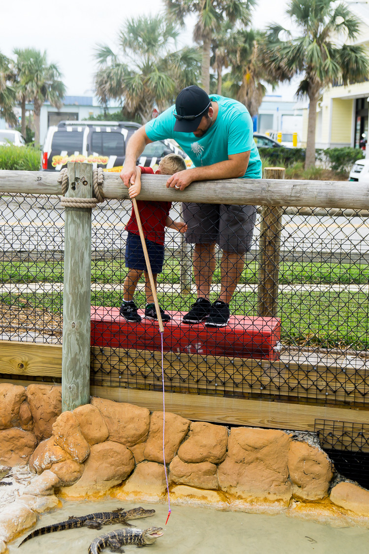 Congo River Golf gives you the chance to feed and hold alligators
