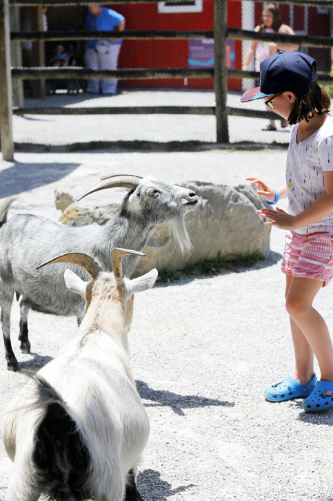 Kids will love the petting area at the Chattanooga Zoo.