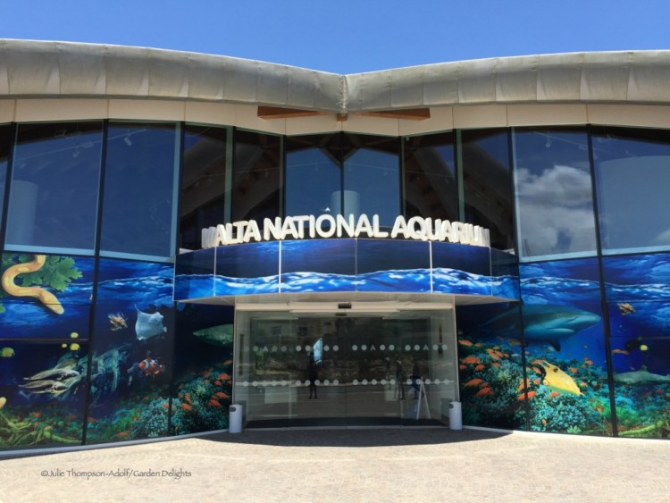 The Malta National Aquarium is a fun thing to do with kids in Malta.