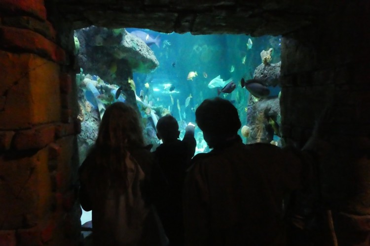 The SEA LIFE Aquarium is a great multi-gen place to visit in Kansas City.