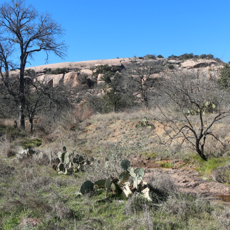 Cactus and Texas Scrub in Fredericksburg, Texas with kids