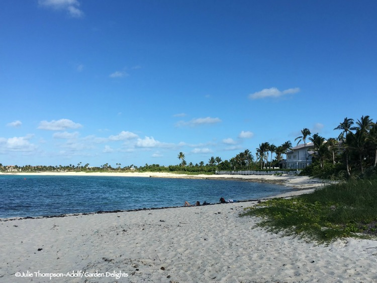 One of the best Bahamas Beaches we found was Cabbage Beach on Paradise Island.