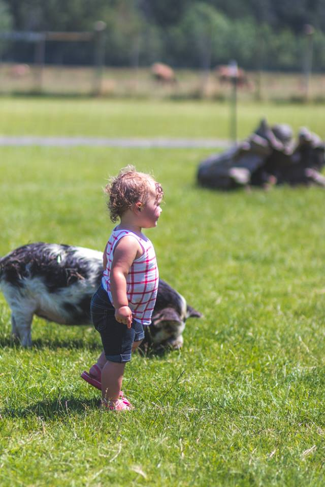 Toddler in front of pig at an Oregon petting zoo