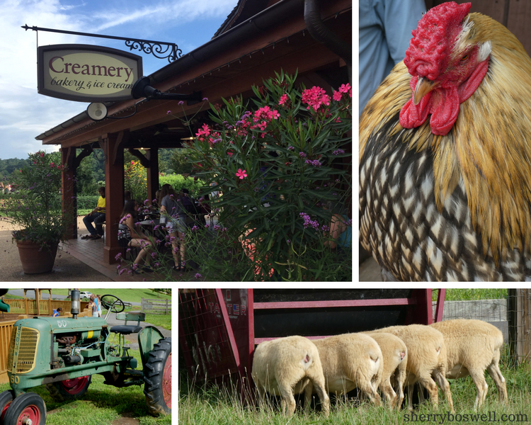 6 Tips for Doing Biltmore Estate ice cream and barnyard