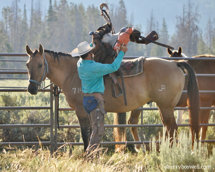 Saddling up horses while Glamping at Goosewing Ranch, Jackson Hole, Wyoming.