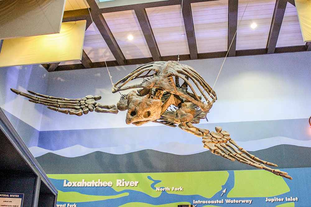 The inside learning center at Loggerhead Marine Life Center in The Palm Beaches.