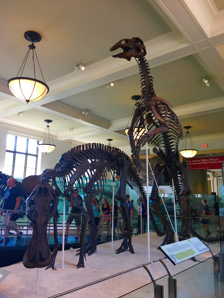 Visit the American Museum of Natural History on a 3 Day itinerary for New York City.