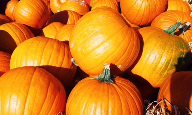 Best Fall Activities for Families in the US