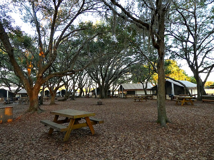 Glamping at Westgate River Ranch, a luxury camping site in Florida.