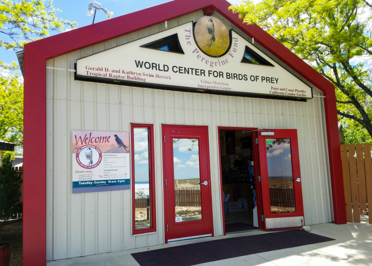 The World Center For Birds of Prey is one of the great things to do in Boise, Idaho