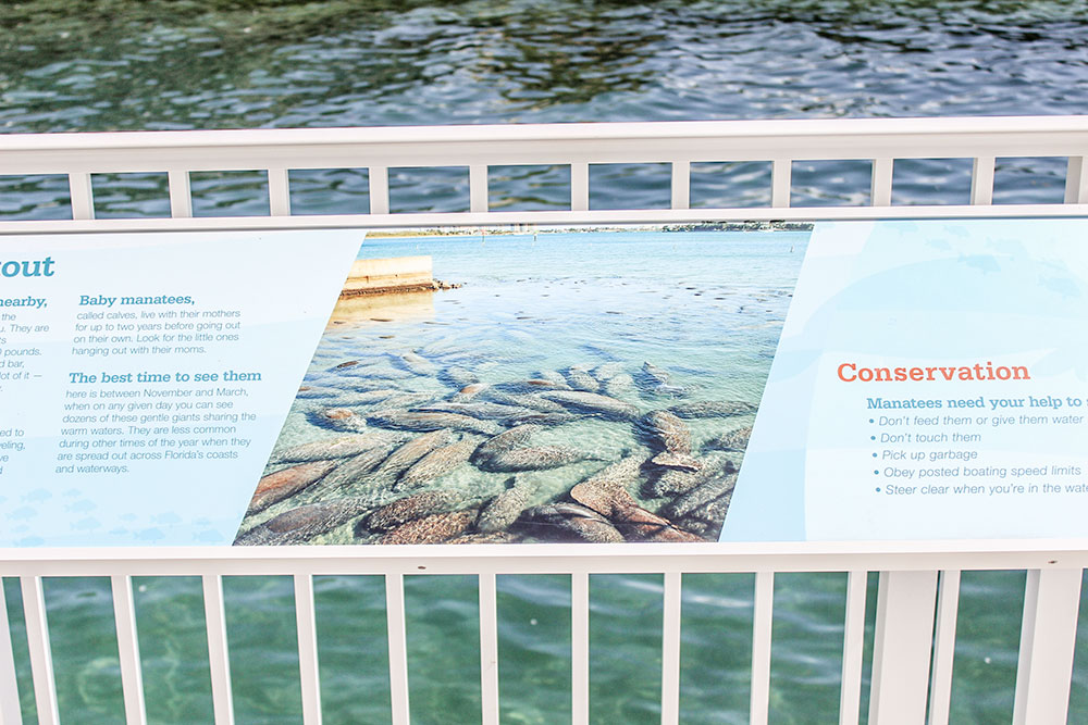 Manatees flock to this area in Manatee Lagoon during the cooler winter months.