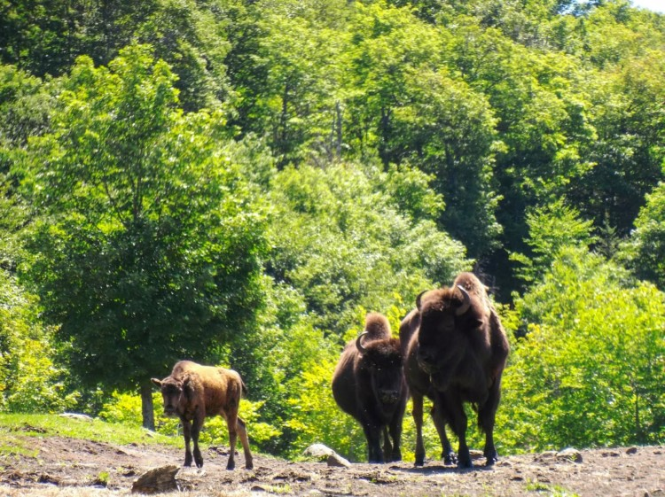 9 best things to do in Mont-Tremblant this summer include a horseback ride on the Bison Trail.
