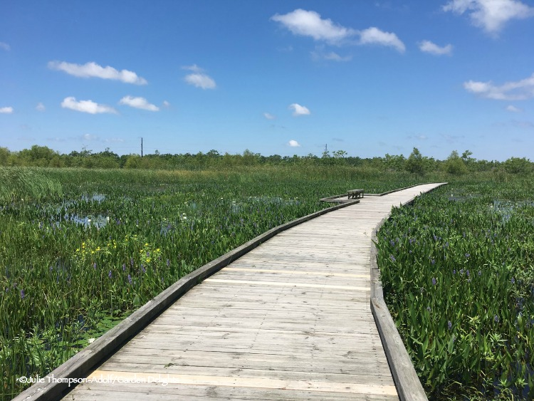 Things to do in Lake Charles, Louisiana include a stroll along the Pintail Drive boardwalk.