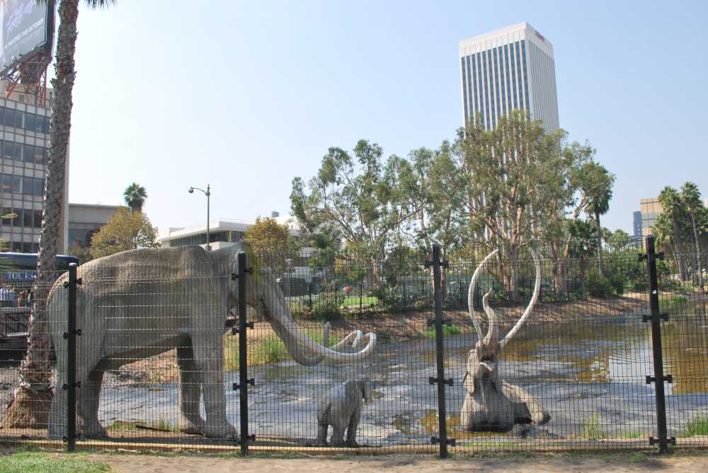 Ice Age fossile are among exciting things to see when you explore LA in 1 day