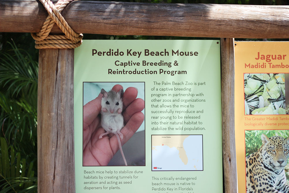 Educational signs all over the Palm Beach Zoo.